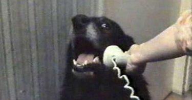 Dog calling