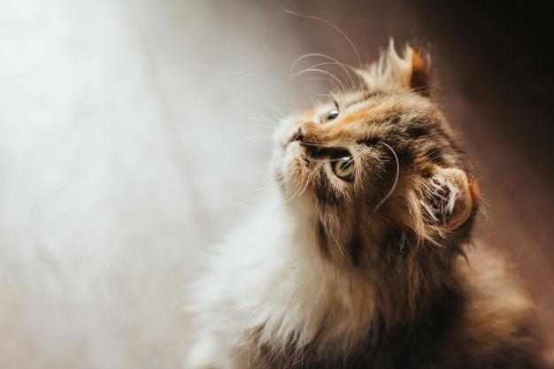 Cat impressed