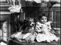 Blair collie dog
