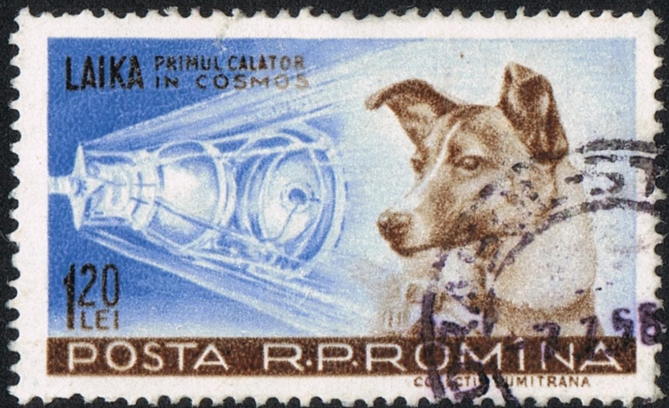 Laika, first traveler into cosmos